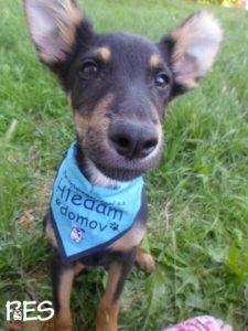 Ouško – adoptovaný