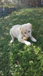 Beethoven – adoptovaný