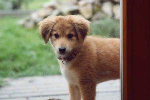 Lotty – adoptovaná