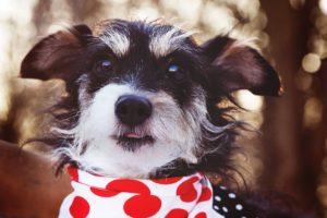 Kiki – adoptovaná