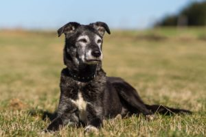 Tessinka – adoptovaná