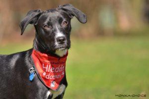 Jessy – adoptovaná