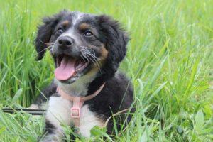 Zaira – adoptovaná