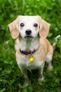 Sheila – adoptovaná