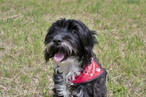 Wendy – adoptovaná