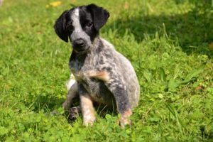 Kuki – adoptovaný
