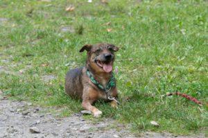 Bobík – adoptovaný