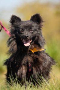 Bertík – adoptovaný