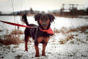 Arny – adoptovaný