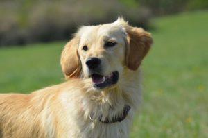Baileys – adoptovaná