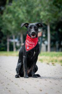 Zuzanka – adoptovaná
