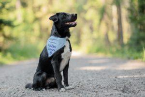 Monty – adoptovaný