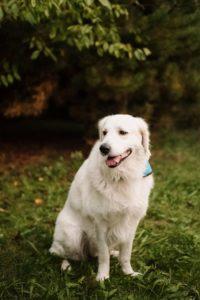 Ben – adoptovaný