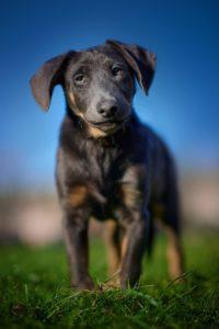 Ouzo – adoptovaný