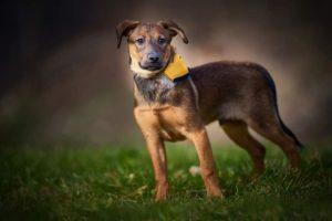 Baileys – adoptovaný
