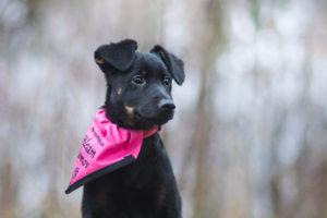 Tennessee – adoptovaná