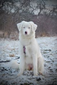 Hluchá Polárka – adoptovaná
