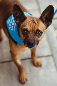 Paddy – adoptovaný