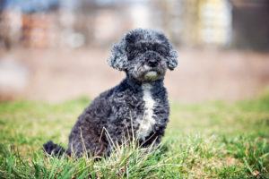 Zora – adoptovaná